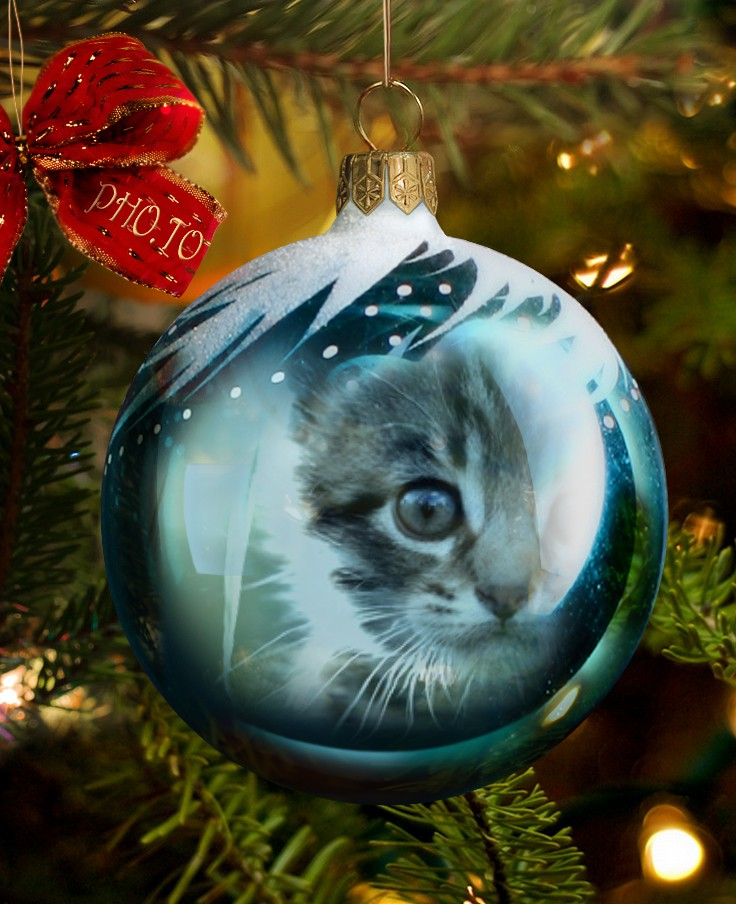 Photo of a cat in a blue Christmas bauble processed with Xmas bauble template.