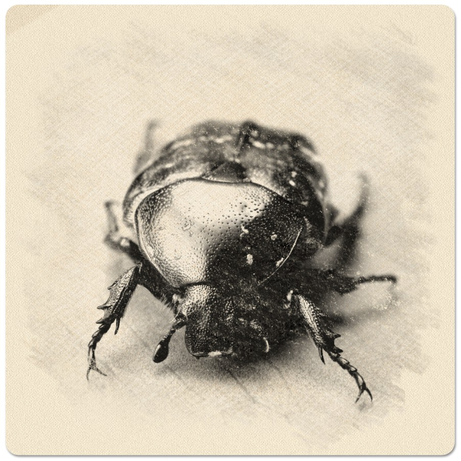 Macro photo of a bug is turned into a nice charcoal drawing