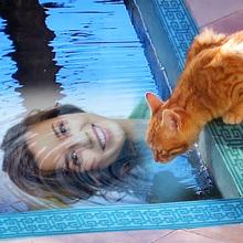 Cat near the Pool