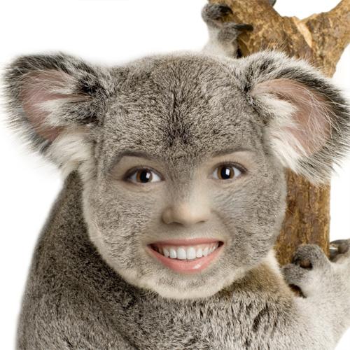 koala funny face. Black Bedroom Furniture Sets. Home Design Ideas