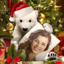 Little Polar Bear Christmas Frame