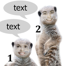 Talking Meerkats