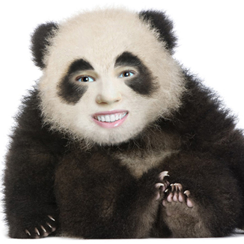 Put your face on a panda body. Animal face in hole montage.